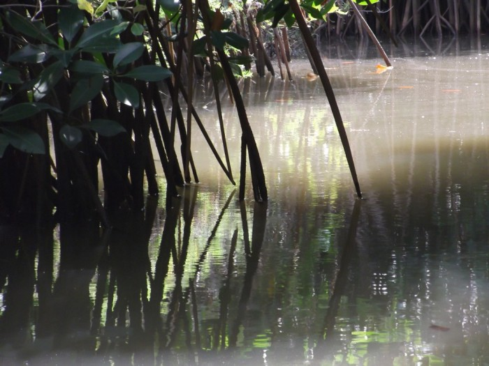 titel-mangroven